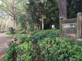 大井弁天の森1